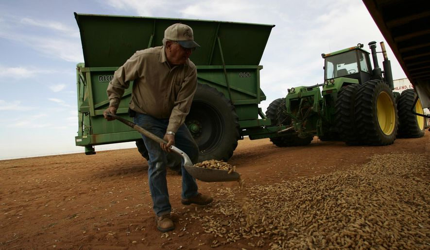 FILE - In this Oct. 31, 2006, image, Wayne Baker shovels spilled peanuts back into a trailer during a peanut harvest near Floyd, N.M. Federal agriculture forecasts show there will be significantly fewer peanuts pulled from the ground in eastern New Mexico during the 2014 harvest season because of fallout from the bankruptcy and sale of a Portales-area peanut-processing plant that was at the heart of a 2012 salmonella outbreak and nationwide recall. (AP Photo/Clovis News-Journal, Andy DeLisle)