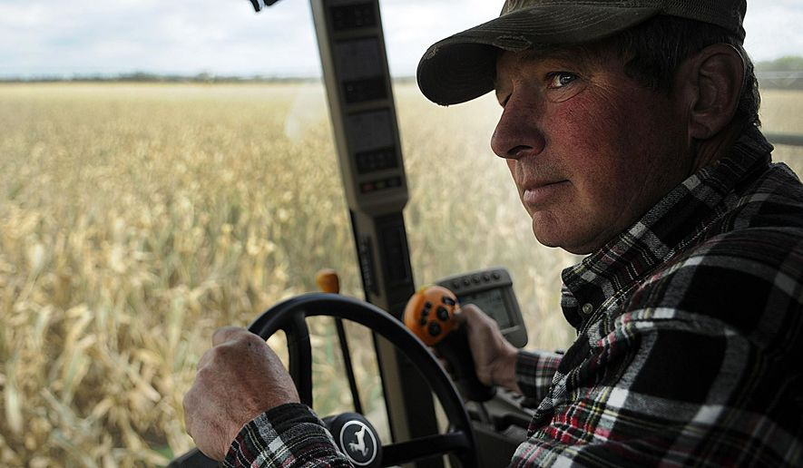 Steve Beck, whose father was killed in a grain bin accident 11 years ago, drives a combine on his farm near Clear Lake, Minn. Monday, Oct. 6, 2014. Minnesota safety advocates are concerned about the amount of grain that will end up in storage bins and elevators this year due to a record harvest and low price point. (AP Photo/The St. Cloud Times, Jun Kai Teoh)