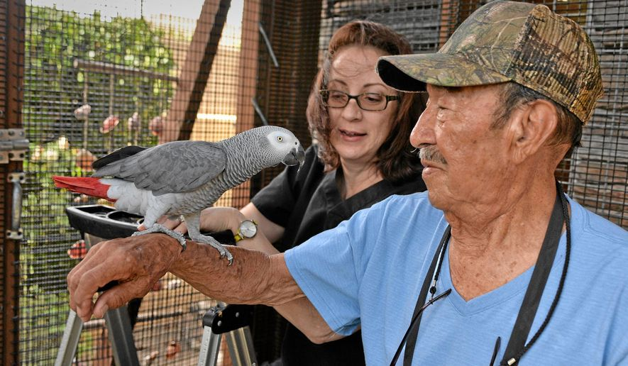 In this Oct. 15, 2014 photo, Nigel, the parrot, was reunited with his second family this week after original owner Darren Chick decided to give him back to the family that had bonded with him the last four years in Torrance, Calif. The reunion was brought about by a Southern California veterinarian who mistook Nigel, an African gray parrot, for her own missing bird, the Daily Breeze reported Sunday. (AP Photo/The Daily Breeze, Robert Casillas)