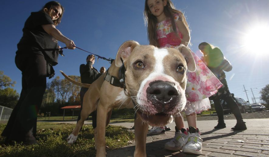 In this Tuesday, Oct. 14, 2014 photo, a pit bull named Buddy stands with caretaker Michelle Mayer, left, and 9-year-old Charlie Burton, at a dog park in the south Denver suburb of Englewood, Colo. Buddy is being cared for in Englewood because of a ban on pit bulls in Aurora, Colo., where the dog lived with his owners. In the November general election, voters will decide whether to repeal Aurora's ban on pit bulls, which has been in place for the past nine years. (AP Photo/David Zalubowski)