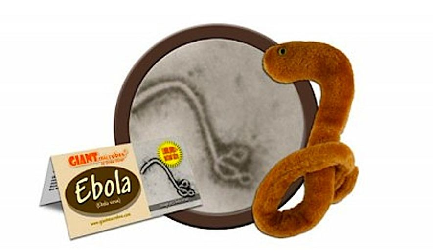 The fuzzy Ebola Plush Toy has sold out worldwide, according to its manufacturer. (Image from Giant Microbes)