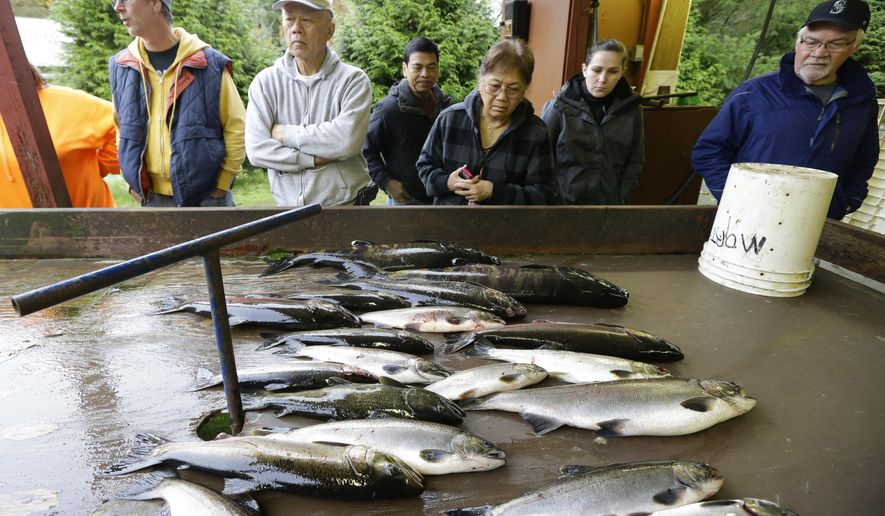 People wait in line for free salmon, Monday, Oct. 20, 2014, at the Grovers Creek Hatchery, in Poulsbo, Wash. The hatchery gives out free fish several days a week after the salmon have been measured, scanned for electronic tracking tags and have had their eggs removed. (AP Photo/Ted S. Warren)