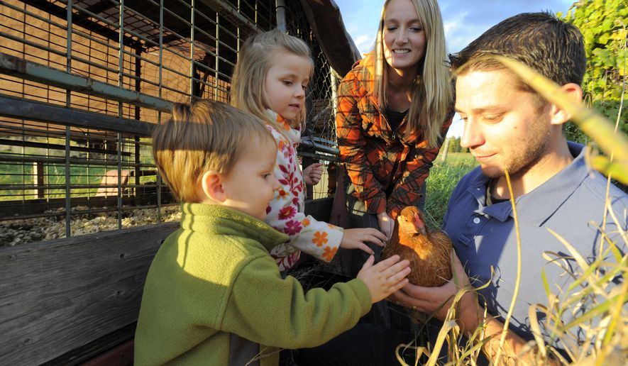 Phillip Hurst, right, holds one of the family's hens, as his wife Theresa, son Miles, 2, and daughter Danielle, 5, all of Tawas City, Mich., look on as they visit their chickens, Tuesday Oct. 7, 2014 on a friend's farm in nearby Wilber Township, Mich. Phil and Theresa Hurst are charged with violating a Tawas City ordinance by raising chickens in a residential area, a misdemeanor, The Detroit News reported. (AP Photo/Detroit News, Steve Perez)