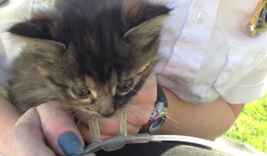 In this Monday Oct 20, 2014 photo provided by the West Des Moines Fire Department, a kitten which was rescued and revived by the West Des Moines Fire Department after a house fire is held by a medic. First responders used oxygen masks to resuscitate the animals. (AP Photo/West Des Moines Fire Department, Denise Kinkade)