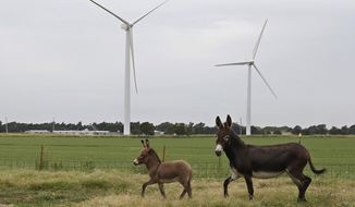 In this July 28, file 2014 photo, two donkeys run through a pasture in front of wind turbines in Calumet, Okla. Tax incentives and subsidies provided by the state to wind energy producers were created when the industry was in its infancy and may need to be re-examined in light of the growing cost to the state treasury, the head of a wind industry trade group told members of a Senate panel on Tuesday. (AP Photo/Sue Ogrocki, File)