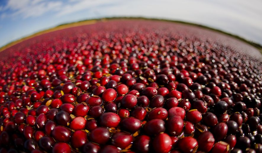 FILE - In this Oct. 5, 2012, file photo provided by the Wisconsin State Cranberry Growers Association, cranberries float in a marsh waiting to be harvested near Warrens, Wis. Ocean Spray is shooting its signature cranberry commercial in central Wisconsin for the first time. (AP Photo/Wisconsin State Cranberry Growers Association, Andy Manis, File)