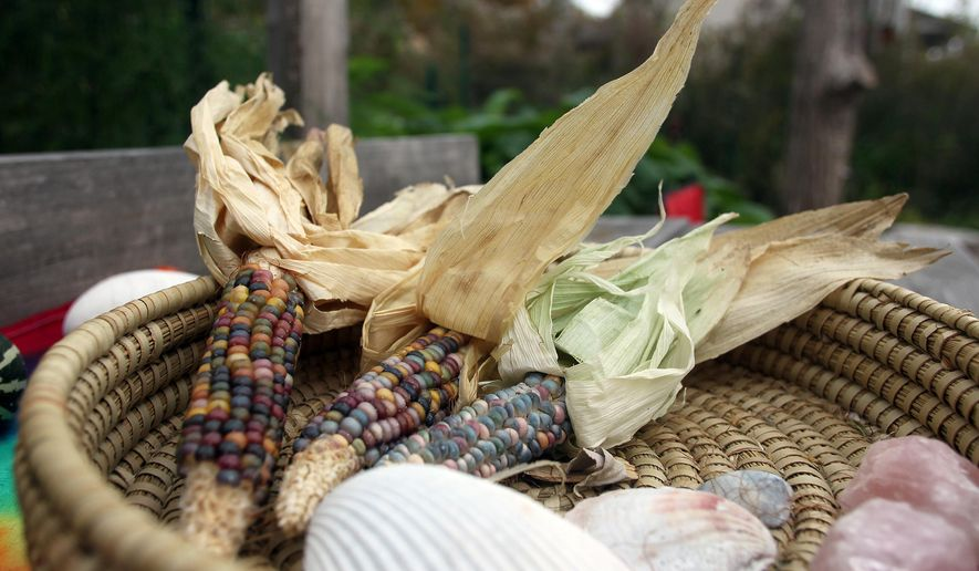 In this Friday, Oct. 17, 2014, photo, corn grown at Gaia's Peace Garden is seen in Iowa City, Iowa. Blair Frank, who owns the chemical-free garden, treats the property like a public park and allows anyone to visit and roam there. He also allows people to harvest food and herbs there on request and participate in its upkeep.  (AP Photo/Iowa City Press-Citizen, David Scrivner)