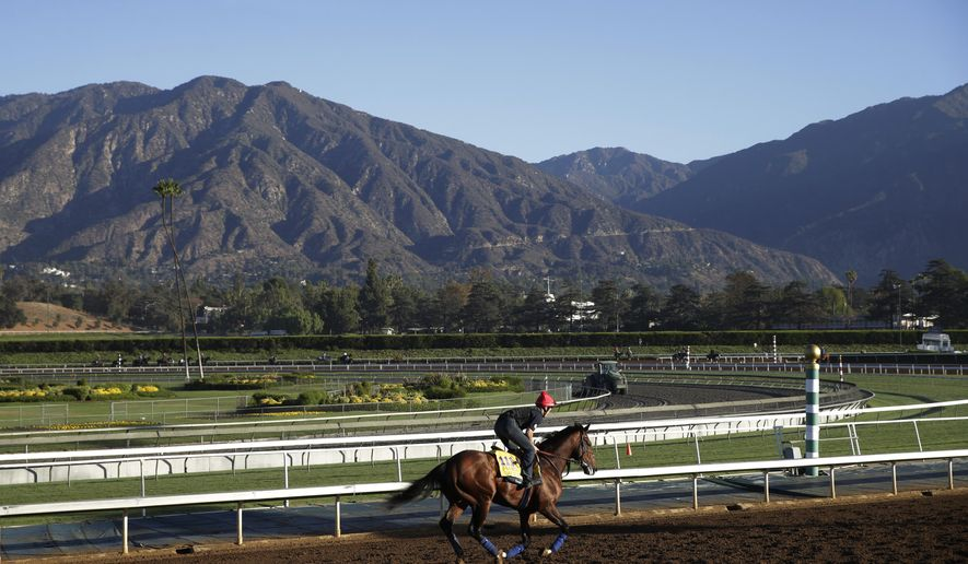An exercise rider takes Zivo for a morning workout ahead of the Breeders' Cup Classic horse race at Santa Anita Park Wednesday, Oct. 29, 2014, in Arcadia, Calif. (AP Photo/Jae C. Hong)