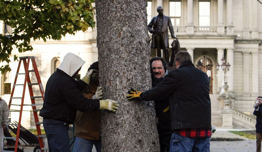 Workers set the 2014 official State Christmas Tree at the Capitol in Lansing, Mich., Saturday, Nov 1, 2014. The blue spruce was donated by Bill and Helen Bjorkman, and traveled over 420 miles from their home in Kingsford atop a large flatbed semi.   It was 66 feet tall and weighs about 11,000  pounds.  The tree is about 50-years-old. (AP Photo/The State Journal, Matthew Dae Smith)