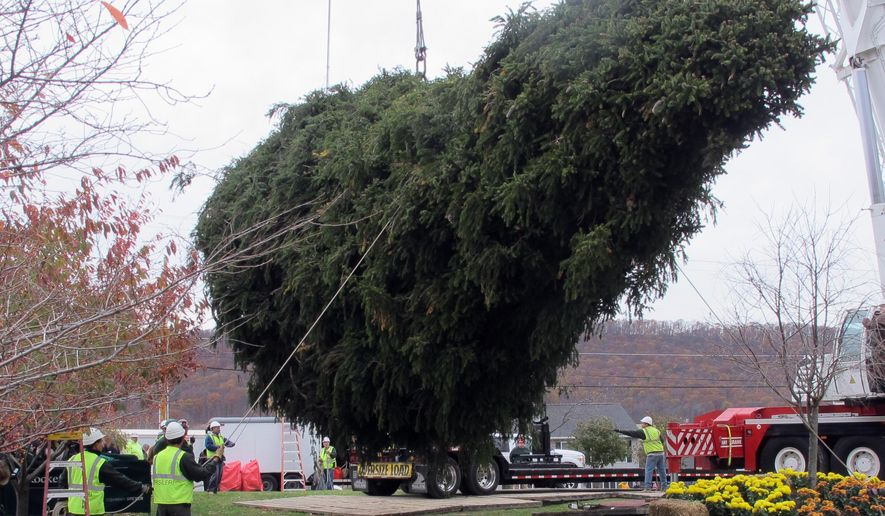 An 85-foot, 13-ton Norway spruce, which will serve as Rockefeller Center's Christmas tree this year, is hoisted onto a trailer Wednesday morning, Nov. 5, 2014, in Bloomsburg, Pa., for the 155-mile journey to midtown Manhattan. The tree will be illuminated for the first time on Dec. 3 in a ceremony that's been held since 1933. The tree came from the home of Dan Sigafoos  and Rachel Drosdick-Sigafoos. (AP Photo/Michael Rubinkam)