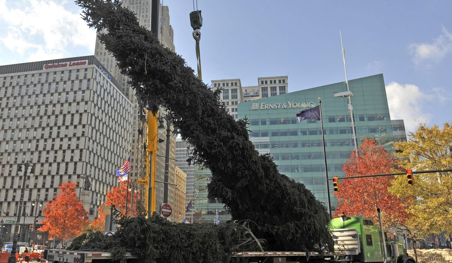 A 60-foot-tall Norway spruce from northern Michigan is lifted into place at the Campus Martius Park in downtown Detroit, Wednesday, Nov. 5, 2014. (AP Photo/Detroit News, Charles V. Tines)  DETROIT FREE PRESS OUT; HUFFINGTON POST OUT , MAGS OUT