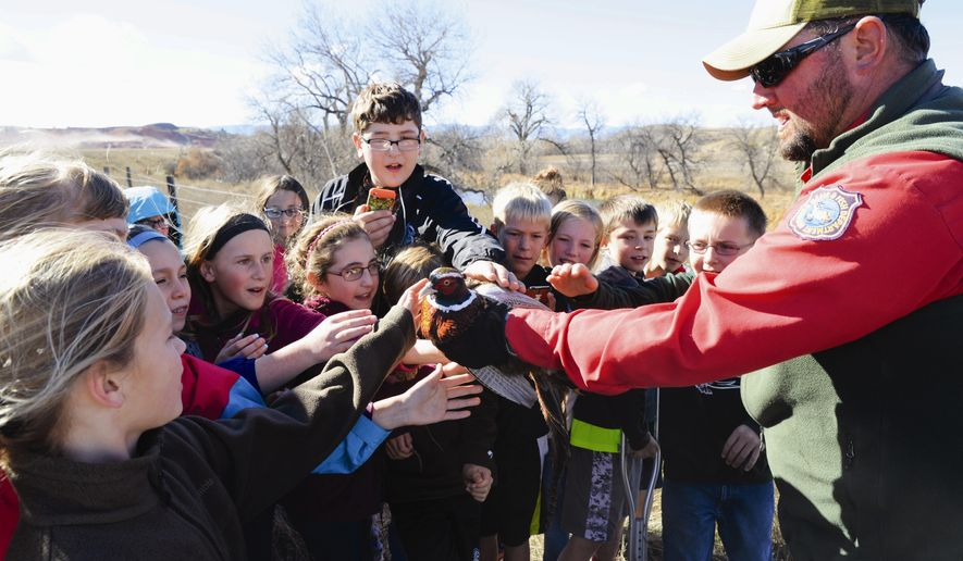 In this Oct. 29, 2014 photo, Darrell Meineke of the Sheridan Bird Farm presents a pheasant to a group of fifth-graders from Tongue River Elementary School during a release near Acme, Wyo. This year was the first in a new partnership between the Wyoming Game and Fish Department, the Sheridan-Johnson County Pheasants Forever chapter and local schools. That partnership has allowed Meineke to significantly expand his education efforts on incubating, hatching and raising pheasants to be stocked on public lands for hunting. (AP Photo/Sheridan Press, Justin Sheely)