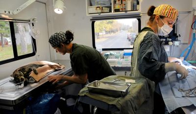ADVANCE FOR MONDAY NOV. 10 - In this Oct. 30, 2014 photo, veterinarian Lisa McCargar, right, spays and neuters feral cats, while veterinarian  tech Amy Travers helps a feral cat in recovery in a mobile surgery vehicle in Taylors Falls, Minn. (AP Photo/The St. Paul Pioneer Press, Jean Pieri)  MINNEAPOLIS STAR TRIBUNE OUT