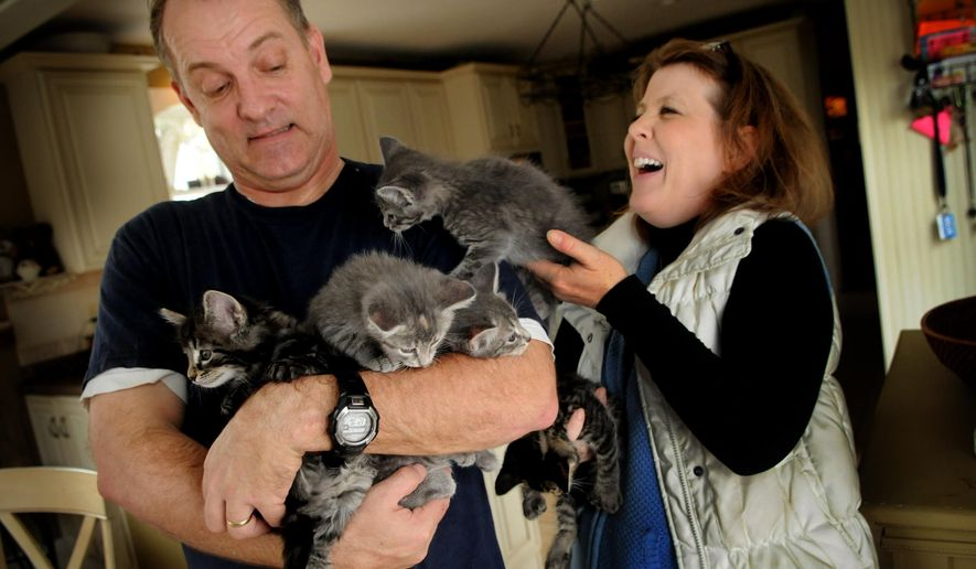 ADVANCE FOR MONDAY NOV. 10 - In this Oct. 30, 2014 photo, Annie Bent, right, and her husband, Jim, show feral kittens that she picked up that will be adopted after they are spayed or neutered, in Taylors Falls, Minn. (AP Photo/The St. Paul Pioneer Press, Jean Pieri)  MINNEAPOLIS STAR TRIBUNE OUT