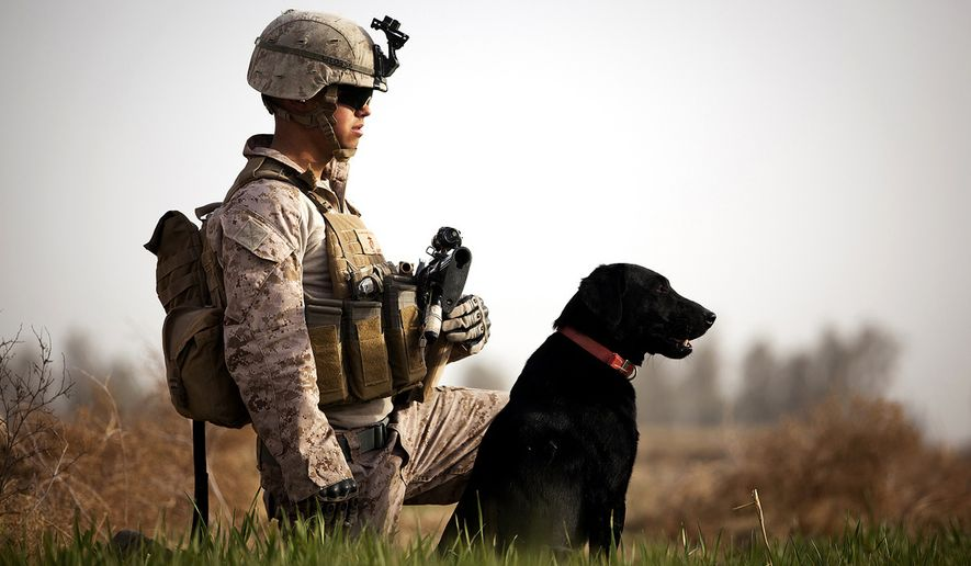 Lance Cpl. Nick Lacarra, a 20-year-old improvised explosive device detection dog handler with Combined Anti-Armor Team 2, Weapons Company, 3rd Battalion, 3rd Marine Regiment, and a native of Long Beach, Calif., holds security in a field with his dog Coot while halted during a partnered security patrol with Afghan Border Police here, Jan. 30. In southern Garmsir district, an area with a history of tribal conflict, the growing ABP force has deepened its roots and established governance through the mentorship of the 3/3 Weapons Co. Marines.