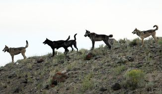 FILE -In this August 2012 file photo provided by Wolves of the Rockies a wolf pack stands on a hillside of the Lamar Canyon in Yellowstone National Park, Wyo. A Center for Biological Diversity report identifies almost 360,000 square miles of potential gray wolf habitat in the West and Northeast, including roughly 6,000 square miles in scattered patches of Nevada. (AP Photo/Wolves of the Rockies,File)