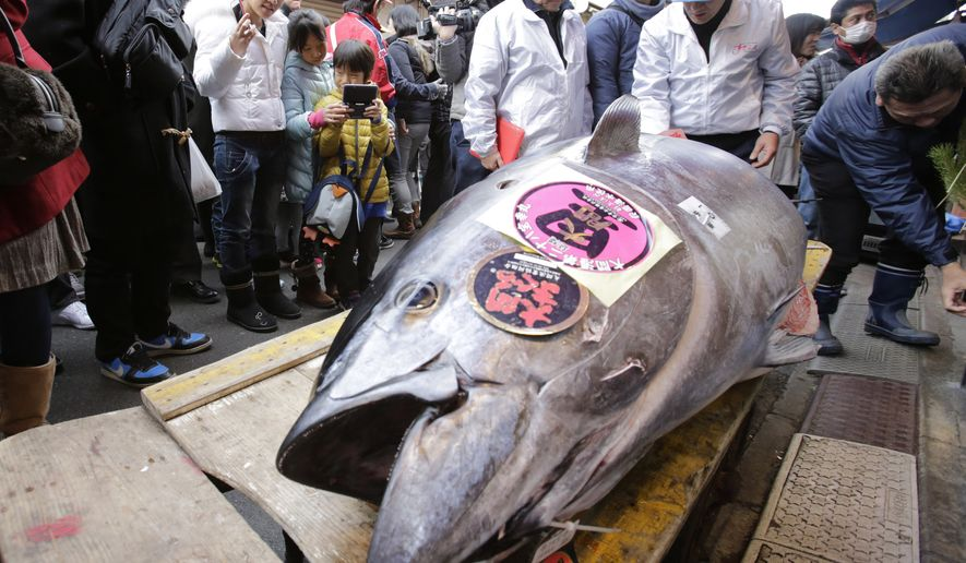 FILE - In this Jan. 5, 2014 file photo, people watch a bluefin tuna laid in front of a sushi restaurant near Tsukiji fish market after the year's celebratory first auction in Tokyo. The researchers at Tokyo University of Marine Science and Technology are fine-tuning a technology to use mackerel surrogates to spawn the bluefin, a process he hopes will enable fisheries to raise the huge, torpedo-shaped fish more quickly and at lower cost than conventional aquaculture. The aim: to relieve pressure on wild fish stocks while preserving vital genetic diversity. (AP Photo/Shizuo Kambayashi, File)