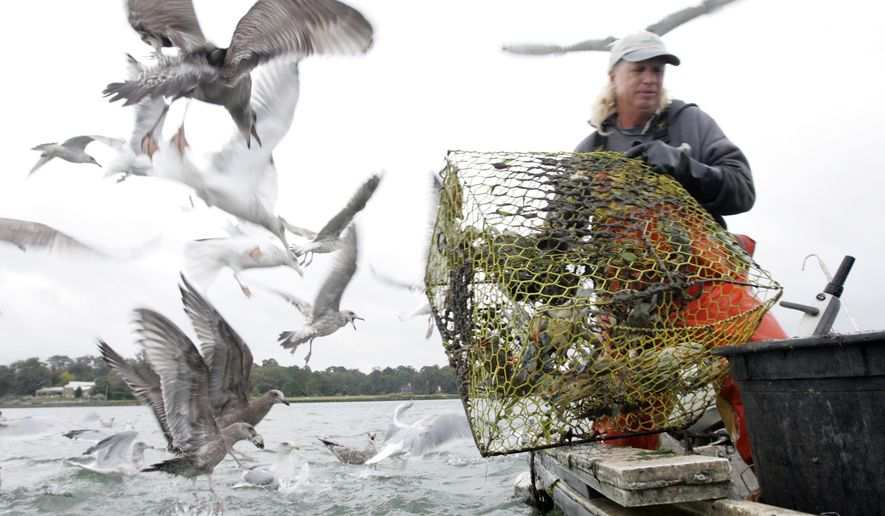 FILE - This Wednesday Oct. 28, 2009 file photo shows Joe Palmer, owner of Joey's Crab Company, as he empties a crab trap while seagulls gather for tidbits of bait on Lynnhaven bay  in Virginia Beach, Va. After decades of declines in the blue crab population, only one of the original 13 processing plants downtown remains. (AP Photo/Steve Helber)
