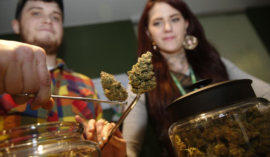 In this photograph taken on Thursday, Nov. 20, 2014, bud tenders Maxwell Bradford, back left, and Emma Attolini display buds in the shape of Christmas trees that are on sale for the holiday season in a recreational marijuana shop in northwest Denver. The nascent marijuana industry in Colorado is targeting holiday shoppers with special deals much like traditional retailers offer. (AP Photo/David Zalubowski)