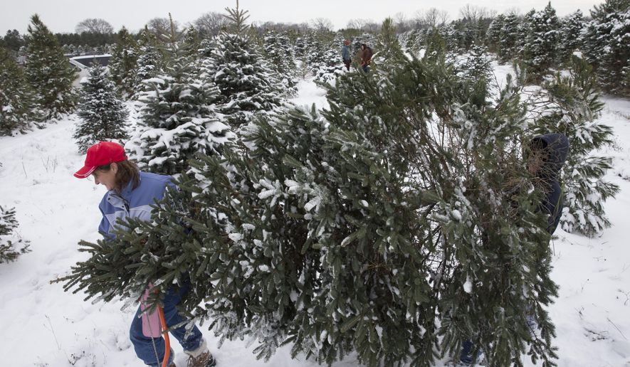 In this Friday, Nov. 28, 2014 photo, Melissa Baus, left, and Becky Witt carry the tree they just cut to be baled at Riehle's Tree Farm, in Dousman, Wis. Baus has been cutting her tree at the farm for about 30 years. Following last year's high Christmas trees sales nationwide, many Wisconsin growers are looking for another good year. About 33 million real trees were sold in the U.S. last year, more than any of the previous seven years, according to the National Christmas Tree Association. (AP Photo/Milwaukee Journal-Sentinel, Mark Hoffman)