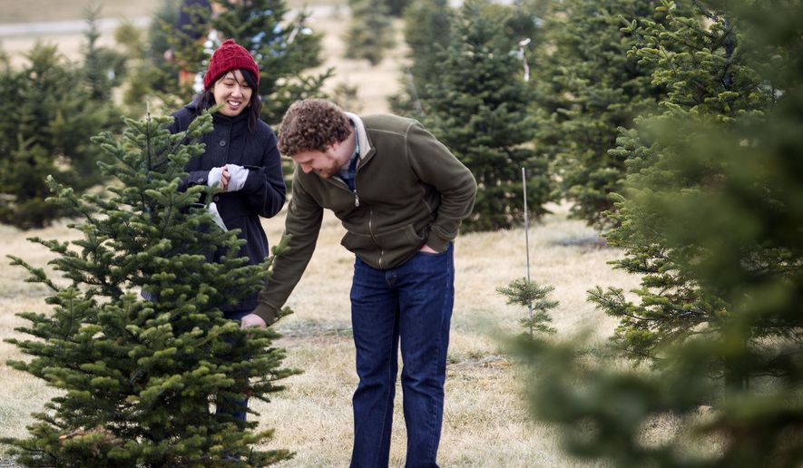 In this Dec. 6, 2014 photo, Malcolm Rosenthal, right, and Jackie Sojico look for their Christmas tree at Spilker's Pineridge Tree Farm in Lincoln, Neb. The Lincoln Journal Star reports fewer people are establishing new Christmas tree farms, while current owners are retiring and selling their property to land developers. (AP Photo/The Journal-Star, Matt Masin) LOCAL TELEVISION OUT; KOLN-TV OUT; KGIN-TV OUT; KLKN-TV OUT