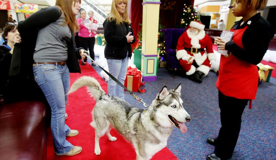 In this Sunday, Dec. 7, 2014 photo, Kelly Maisel, left, owner of Eli, a Siberian Husky, gets ready for Eli's photo with Santa at Oakland Mall in Madison Heights, Mich. About 20 dogs and cats visited the Oakland Mall in Troy for the two-hour weekend event called Pet Photos with Santa. (AP Photo/Detroit Free Press, Regina H. Boone)