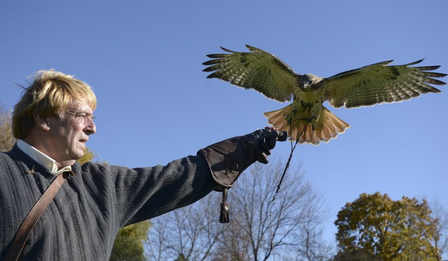 In this Oct. 28, 2014 photo falconer Craig Hendee  works with one of his red-tailed hawks takeing flight in Gurnee, Ill. As a boy, Hendee and his dad nursed an injured red-tailed hawk for two days, keeping ice on its wing, until they finally were able to release it back into the wild. Hendee was just a kindergartner at the time, but he became fascinated with the bird and it set him on a path that turned his childhood fascination into a lifelong career working with birds of prey around the world. The Old Mill Creek resident now has been a licensed falconer for 47 years, teaching the ancient art of falconry and keeping it alive for future generations. (AP Photo/Daily Herald, Mark Black)  MANDATORY CREDIT, MAGS OUT