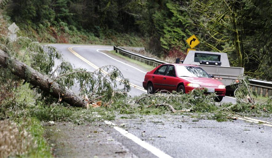 Motorists negotiate a downed tree across Rainier Road SE several miles south of Spurgeon Creek Rd. SE, Wednesday morning Dec. 10, 2014, near Olympia,Wash., as a series of powerful winter storms take aim at the region. (AP Photo/The Olympian, Steve Bloom)