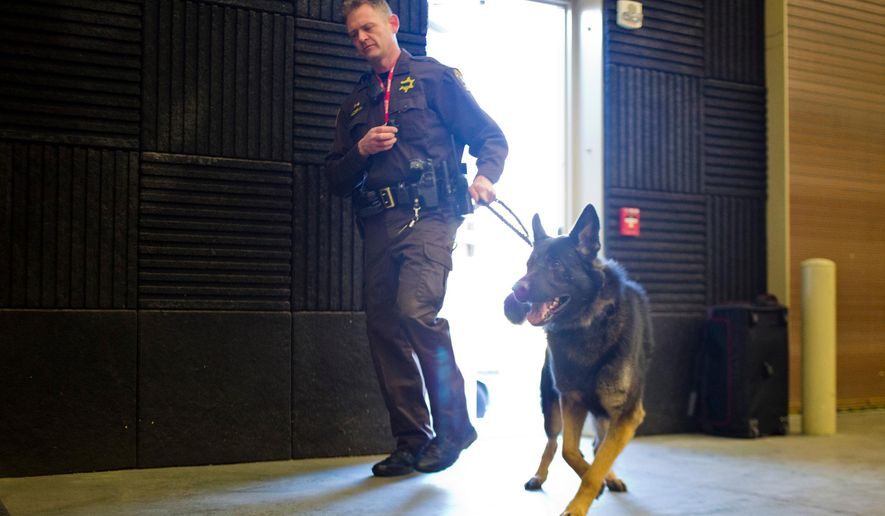 German Shepard patrol K-9, Sabre, is introduced by his handler Deputy Dan Alderink to the police force at Kent County Sheriff's Office. He is named after a K-9 from the Lansing police department that was shot and killed in the line of duty, Grand Rapids, Mich., Wednesday, Dec. 10, 2014. (AP Photo/The Grand Rapids Press, Joel Bissell)