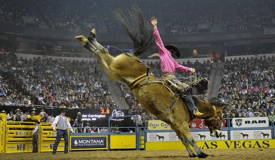 Tyler Corrington of Hastings, Minn. competes in the saddle bronc riding during the fifth go-round of the National Finals Rodeo at the Thomas & Mack Center on Monday, Dec. 8, 2014, in Las Vegas. (AP Photo/Las Vegas Review Journal, David Becker)