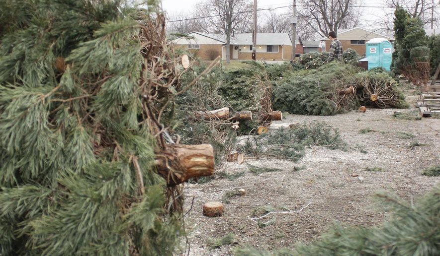 This Sunday, Dec. 14, 2014 photo shows damage to Christmas trees done by vandals, in Huber Heights, Ohio. More than 100 Christmas trees being offered by the Optimist Club were pushed over and damaged by vandals sometime after the lot closed on Saturday. (AP Photo/The Dayton Daily News, Michael Franz) LOCAL PRINT OUT; LOCAL TELEVISION OUT; WKEF-TV OUT; WRGT-TV OUT; WDTN-TV OUT