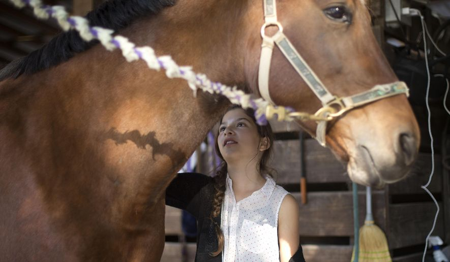 """Ava Exelbirt brushes one of the remaining horses at Masterpiece Equestrian Center in Davie, Fla., Tuesday, Dec. 16 2014. There's nothing that can be done to save 18 poisoned horses at the equestrian center, so their young riders are holding """"spa days"""" to brush their manes and tails, paint their hooves, feed them hay and pet their noses to keep the animals comfortable in their last days. Four horses at Masterpiece Equestrian Center have died since October because of contaminated feed, and the owners of the rest are struggling to accept the approaching deaths of the others. (AP Photo/J Pat Carter)"""