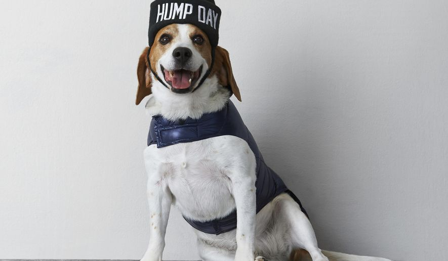 This undated photo provided by American Eagle Outfitters shows a beagle wearing an American Beagle Outfitters beanie and a puffer vest.  For some pet owners, clothing plays into a luxury lifestyle. For others, it's a way to match man's best friend; and sometimes it's simply about keeping animals warm this winter. (AP Photo/American Eagle Outfitters)