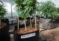 Marijuana Research.JPEG-0ace8.jpg