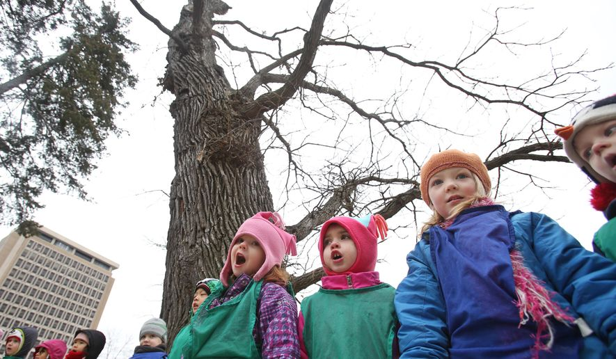 In this Thursday, Dec. 18, 2014 photo, University of Wisconsin's preschool lab 4K students sing a goodbye song beside the President's Burr Oak tree, one of the oldest trees on campus, behind the School of Human Ecology in Madison, Wis. The tree on the University of Wisconsin's Madison campus, beloved by some of its youngest students, is coming down. UW-Madison had hoped to keep the tree standing on campus as long as possible, Daniel Einstein, the university's historic and cultural resources manager, told the Wisconsin State Journal. But the recent drought and harsh winter caused the hollow old oak to decline rapidly, he said. (AP Photo/Wisconsin State Journal, Amber Arnold)