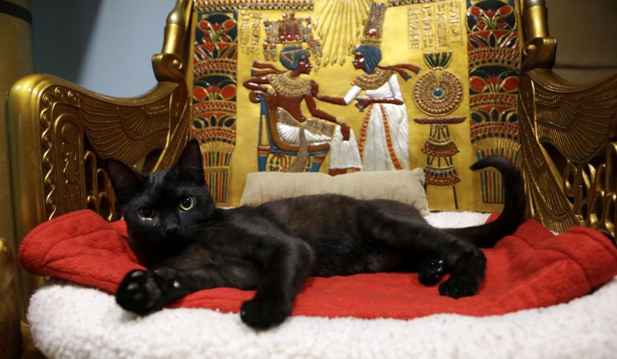 In this Thursday, Dec. 18, 2014 photo, a cat rests on the throne bed in the King Tut-theme cat playroom at the Oregon Humane Society in Portland, Ore. Modern-day cats have not yet become associated with deities as they were in ancient Egypt, but the Internet has gotten them a little closer. (AP Photo/Don Ryan)