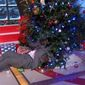 """Shaquille O'Neal pulls himself out from under a Christmas tree during a broadcast of """"The NBA on TNT,"""" Dec. 25, 2014. (TNT screenshot)"""