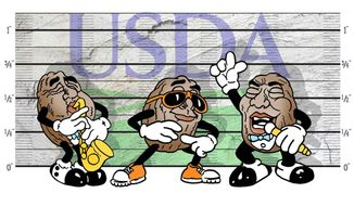 California Raisins Busted by the USDA Illustration by Greg Groesch/The Washington Times