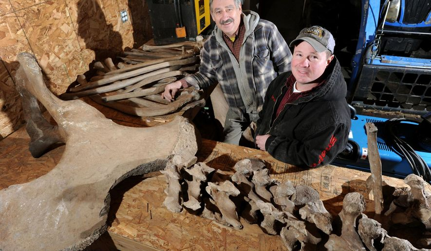 In this Jan. 7, 2015 photo, Dan LaPoint, right, and Eric Witzke, pose with just a few of the many ancient Mastodon bones LaPoint unearthed while excavating a pond on some of Witzke's property outside Olivet, in Bellevue Township, Mich.  (AP Photo/The State Journal, Rod Sanford)  NO SALES