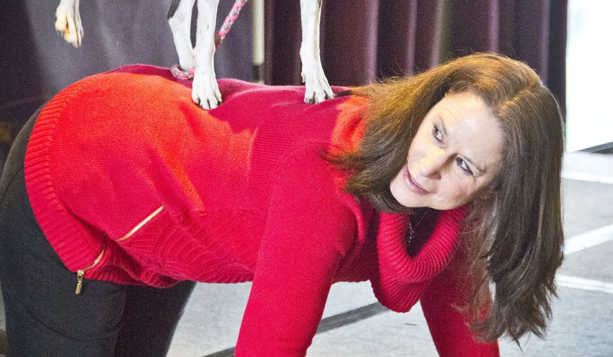 Karen Profenna, from New City, N.Y., gets down hands and knees to allow Hailey, her mixed breed all American dog, to get onto her back to show tricks, during a press preview for the 139th Annual Westminster Kennel Club Dog Show, Wednesday, Jan. 21, 2015, in New York. Hailey will compete in the 2nd Annual Masters Agility Championship at Westminster Feb. 16-17.  (AP Photo/Bebeto Matthews)