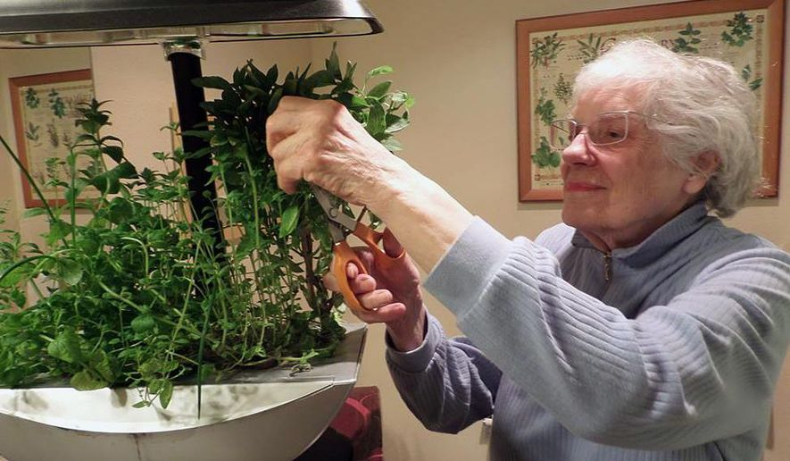 """In this photo provided by Hollis Fay, and taken in November 2014, Barbara Fay trims plants in her Aerogarden at her condo on Bainbridge Island, Wash. When the Alaska Cooperative Extension Service published its book on growing and using fresh herbs in the Far North, dedicating it was as easy as sprinkling chives on a baked potato. """"An Alaska Herb Garden"""" honors Barbara Fay, a self-taught gardener whose experiments with herb varieties in the harsh interior Alaska climate over 40 years was an inspiration for the book. (AP Photo)"""