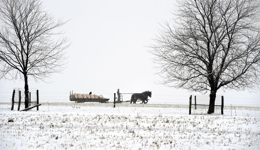 A man hauls farm cargo with a horse-drawn carriage in Leacock Township, Lancaster County on Saturday, Jan. 24, 2015. Overnight snow brought wet, slushy conditions to the area. (AP Photo/LNP Media Group, Dan Marschka)