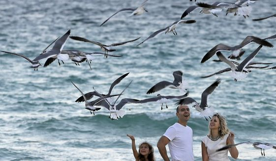 MIAMI , FL -Dimitry Binkevich and his wife Julia, of New York City, enjoy a day at the beach with their daughters Dana, left, and Lia as they feed a flock of Forster's terns as they visit Miami Beach, Fla., Tuesday, Jan. 21, 2015. (AP Photo/Alan Diaz)