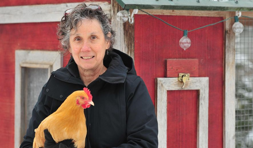 Eileen Dickinson, who keeps hens in a chicken coop in her backyard in Ann Arbor, Michigan, is shown on Tuesday, Jan. 20, 2015. Ann Arbor officials have approved a revised backyard chicken ordinance allowing residents to keep up to six hens in residential coops. (AP Photo/The Ann Arbor News, Ryan Stanton) LOCAL TELEVISION OUT; LOCAL INTERNET OUT
