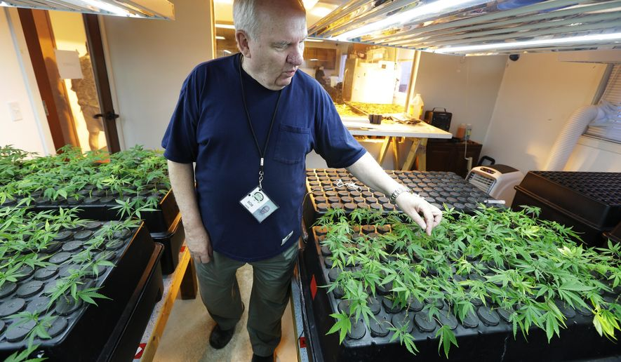 "FILE - In this July 1, 2014, file photo, owner Bob Leeds, inspects small ""clone"" marijuana plants growing under lights at Sea of Green Farms, a recreational pot grower and processor in Seattle. Backers of legalized marijuana in Ohio plan to build 10 large grow sites across the state if voters approve a constitutional amendment they hope to have on the November ballot. (AP Photo/Ted S. Warren, File)"