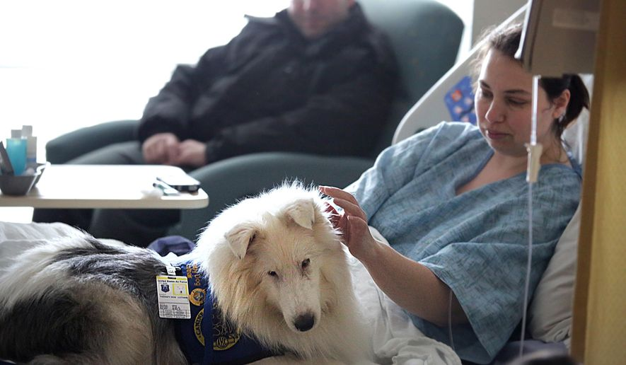 ADVANCE FOR USE SATURDAY, FEB. 14, 2015, AND THEREAFTER- In this Jan. 7, 2015, photo, Lothair, a deaf therapy dog that owner Melanie Paul takes to Langley AFB weekly, waits to be petted by patient Rebecca Bennett in Hampton, Va. (AP Photo/The Daily Press, Judith Lowery)