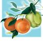 Good Apples and Bad of Islam Illustration by Linas Garsys/The Washington Times