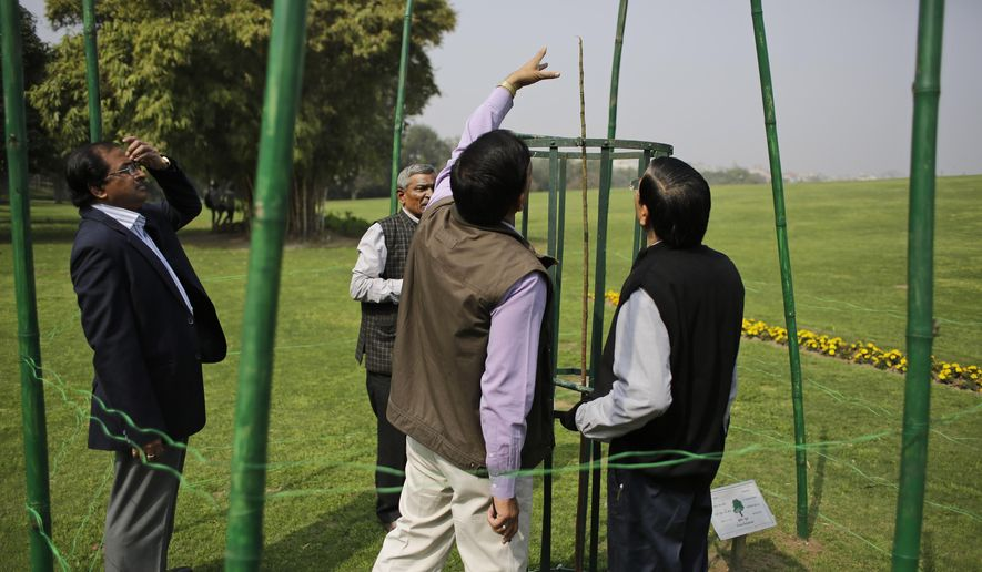 Indian officials inspect the tree, now just a single stem, planted by President Barack Obama at Raj Ghat Mahatma Gandhi Memorial in New Delhi, India, Friday, Feb. 20, 2015.  The lack of leaves has been giving Indian officials sleepless nights, with the local media blasting them for allowing the tree to die. (AP Photo/Altaf Qadri)