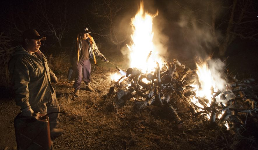 Jose Gracia, left, and Luis Chavez ignite a bonfire early Wednesday morning, March 4, 2015, to protect cherry buds at Rancho El Rosario west of Prosser, Wash. Gracia, the orchard manager, started his work about 8:30 p.m. the night before. In all, he used 63 bonfires, 280 diesel furnaces and eight wind machines to raise the temperature in the orchard. Temperatures dipped below 20 degrees by dawn in several places throughout Yakima and Benton counties, including the area between Mabton and Prosser. (AP Photo/Yakima Herald-Republic, Ross Courtney)