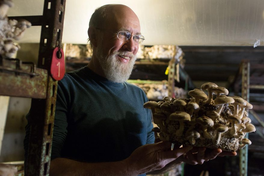 ADVANCE FOR MONDAY MARCH 9 AND THEREAFTER - In a Wednesday, Feb. 4, 2015 photo, Kevin Doyle, who founded Forest Mushrooms in 1985, holds a log of shiitake mushrooms nearly ready for harvest, at his farm in St. Joseph, Minn. What began more than 30 years ago as a way to make a living off his natural sciences degree has, well, mushroomed into a huge indoor farming operation growing 3,000 pounds of mushrooms a week, year round, on 20 acres of rolling, forested hills in Stearns County  (AP Photo/MPR News, Jennifer Simonson)